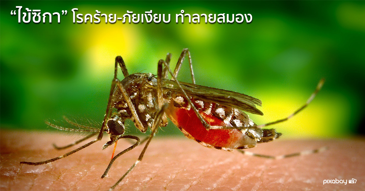 zika-virus-disease
